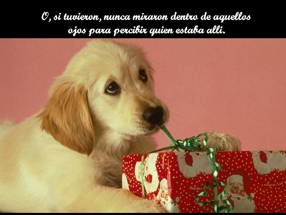 ****ANGELES DE 4 PATAS**** Diapositiva3