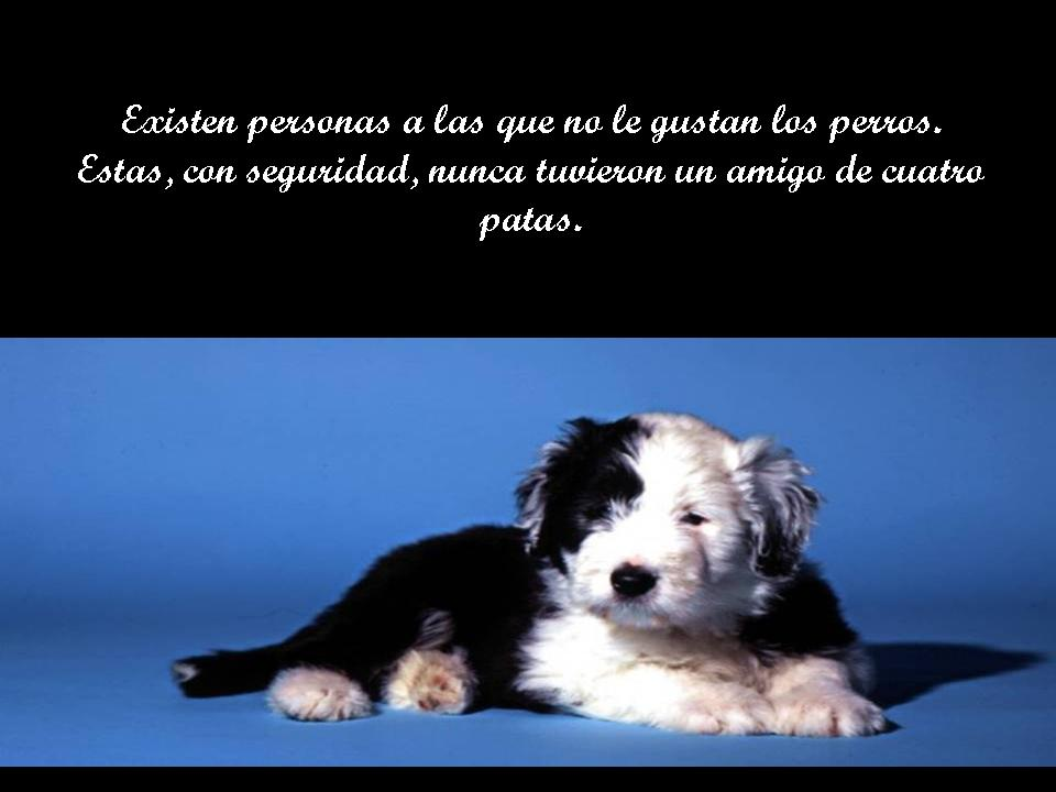 ****ANGELES DE 4 PATAS**** Diapositiva2