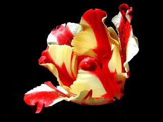 flowers 31
