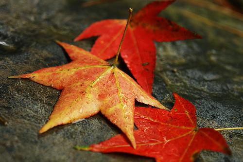 Sergej Aleksandrovič Jesenjin - Page 2 Fall-Leaves