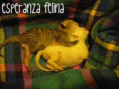 Blanquito y Tigretón DSCN1443