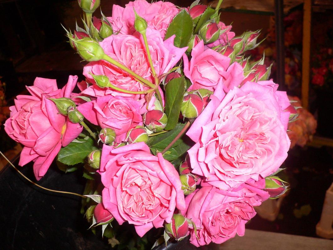 L'amoureuse de fleur..Veut des fleurs ;) Fleurs