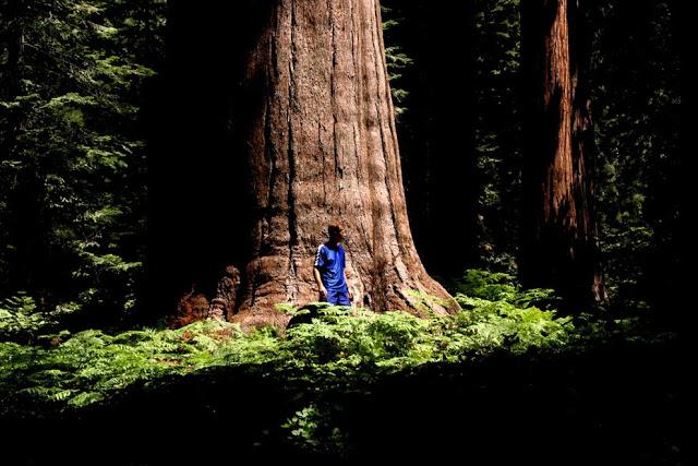 مخلوقات تعيش لأكثر من 3000عام Sequoia_5010879704_fb8258b696_b