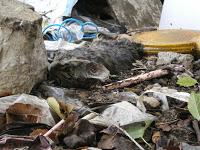 Gatos:han matado a 9, varios heridos, JAEN IMGP2400