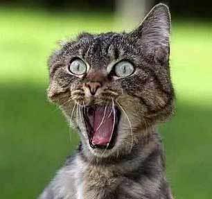 Steve Wynn - Página 4 Gato-asustado-video