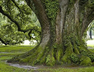 أجمل وأغرب الأشجار إطلاقا Amazing-trees-32