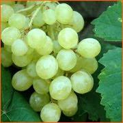 ஊக்கம்,உற்சாகம்,புத்துணர்வு தரும் பழங்கள்- (புகைப்படம்) Grapes