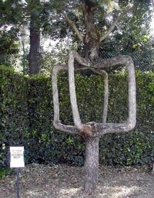 Trees (2) Amazing_tree13