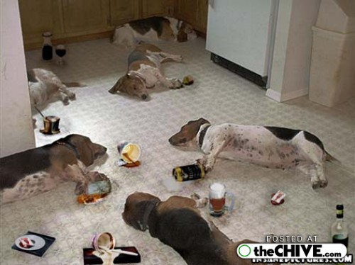 Retorno do admin Funny-drunk-dogs-pics-11