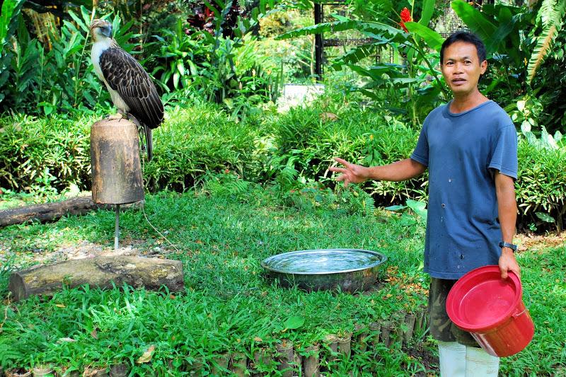 Comparação do tamanho de águias  com relação ao homem. 117