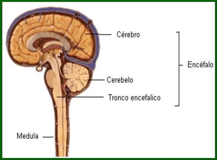 Sistema Nervoso Central Informacoes_em_clip_image001_0000