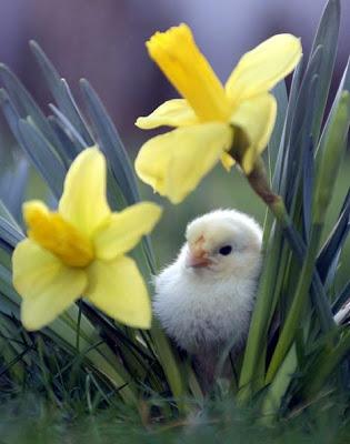 Nek ti jutro zamirise jasminom - Page 10 Spring