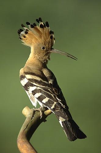un oiseau à découvrir Martin du 08 novembre trouvé par Martine Med