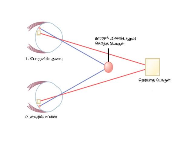 கண் - Anatomy  Depth