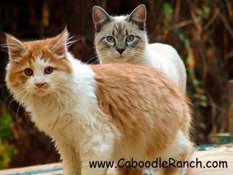 Un pueblo para 500 gatos Ac-9
