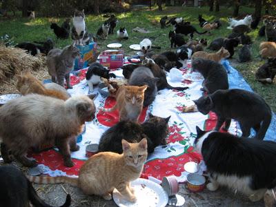 Un pueblo para 500 gatos Ac-14