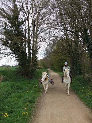 Le poney attelé... DSCF1519