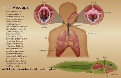 விக்கல் எப்படி ஏற்படுகிறது? Hiccups