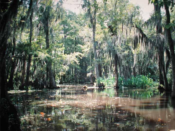 Блатата... Swamp