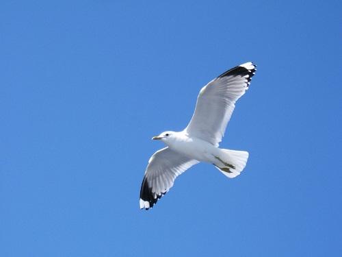 Интересные факты о птицах %D0%B1%D0%B5%D0%BB%D0%B0%D1%8F-%D1%87%D0%B0%D0%B9%D0%BA%D0%B0