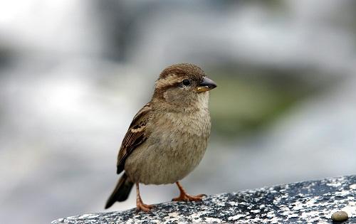 Интересные факты о птицах %D0%B2%D0%BE%D1%80%D0%BE%D0%B1%D0%B5%D0%B9