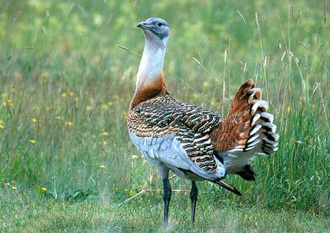 Интересные факты о птицах %D0%B4%D1%80%D0%BE%D1%84%D0%B0-%D0%B4%D1%83%D0%B4%D0%B0%D0%BA