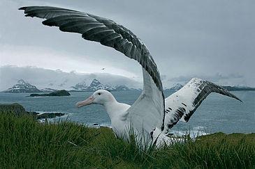 Интересные факты о птицах %D1%81%D1%82%D1%80%D0%B0%D0%BD%D1%81.-%D0%B0%D0%BB%D1%8C%D0%B1%D0%B0%D1%82%D1%80%D0%BE%D1%81