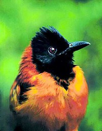 Интересные факты о птицах %D1%8F%D0%B4%D0%BE%D0%B2%D0%B8%D1%82%D0%B0%D1%8F-%D0%BF%D1%82%D0%B8%D1%86%D1%8B%D0%B0