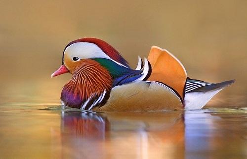 Интересные факты о птицах Original