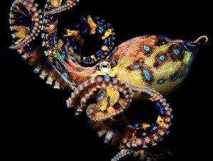 Интересные факты о морских обитателях. Медузы и осьминоги. 241819