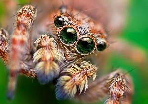 Интересные факты о пауках 2f5243