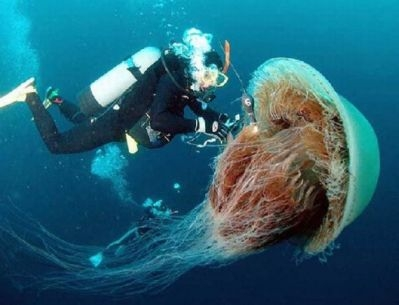 Интересные факты о морских обитателях. Медузы и осьминоги. 57fec5
