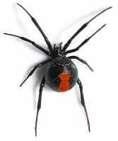Интересные факты о пауках 66138e