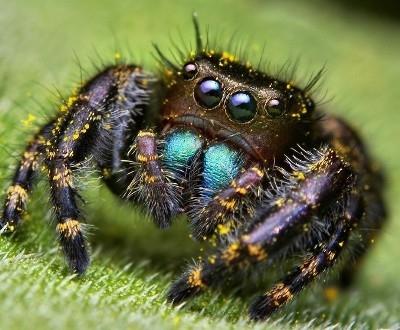 Интересные факты о пауках 6aae85
