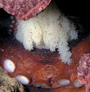 Интересные факты о морских обитателях. Медузы и осьминоги. 7d012a