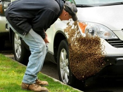 Интересные факты о пчелах 9f029a