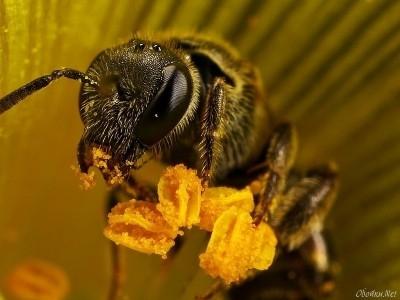 Интересные факты о пчелах A8f492