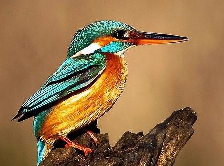 Интересные факты о птицах Ae2fca