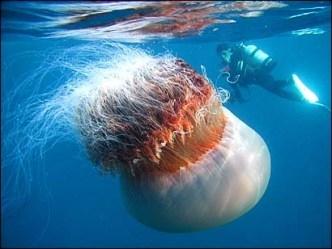 Интересные факты о морских обитателях. Медузы и осьминоги. B735f3