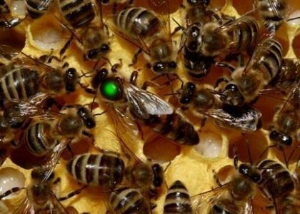 Интересные факты о пчелах Ce4cf6