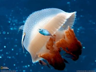 Интересные факты о морских обитателях. Медузы и осьминоги. E97f64