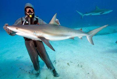 Факты об акулах 13