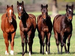 Увлекательные факты о лошадях Images%D1%84%D0%B0%D0%BF