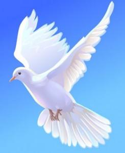 Удивительные факты о голубях %D0%B1%D0%B5%D0%BB%D0%B0%D1%8F-%D0%B3%D0%BE%D0%BB%D1%83%D0%B1%D0%BA%D0%B0-245x300