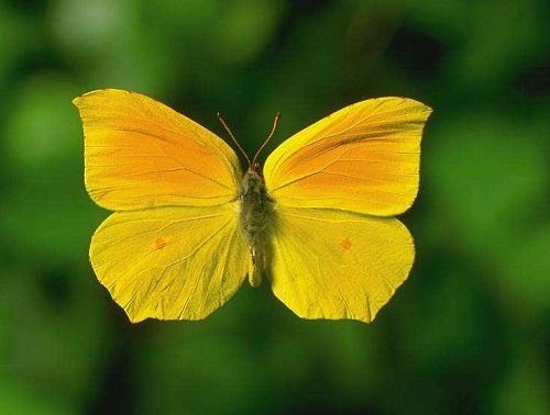 Интересные факты о бабочках %D0%BA%D0%B0%D0%BF%D1%83%D1%81%D1%82%D0%BD%D0%B8%D1%86%D0%B03