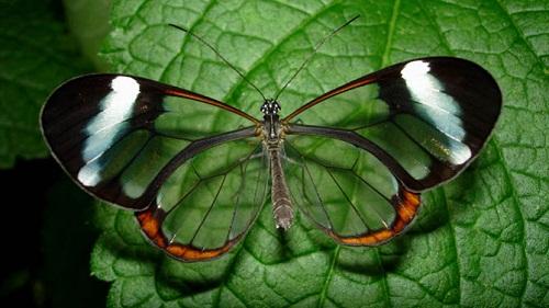 Интересные факты о бабочках %D0%BF%D1%80%D0%BE%D0%B7%D1%80%D0%B0%D1%87%D0%BD%D1%8B%D0%B5-%D0%B1%D0%B0%D0%B1%D0%BE%D1%87%D0%BA%D0%B8
