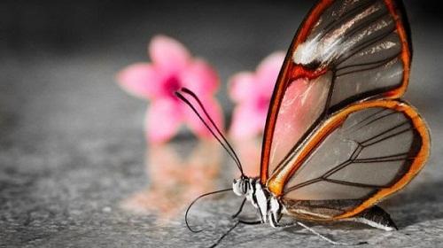 Интересные факты о бабочках 1311627897_0