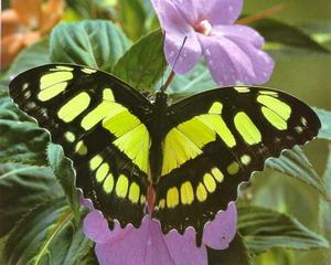Интересные факты о бабочках Babochka