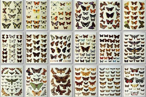 Интересные факты о бабочках Butterflies