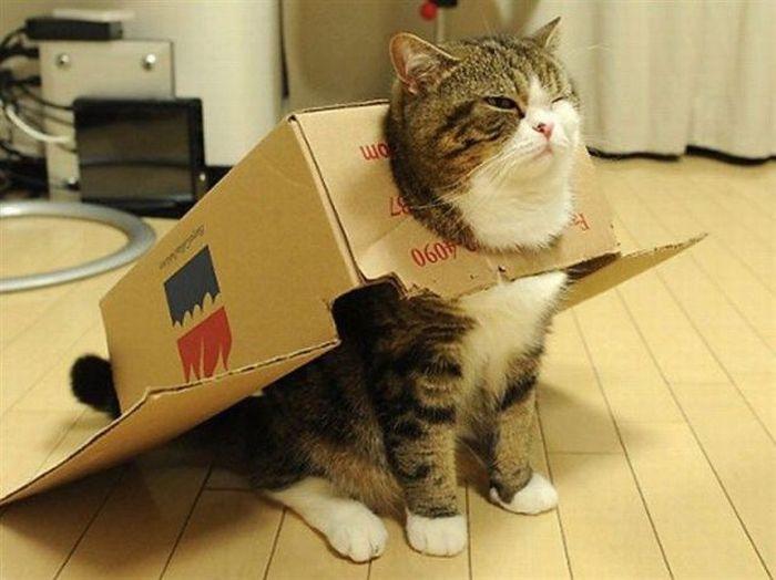 Gattilicious  =^.^= Cat-box